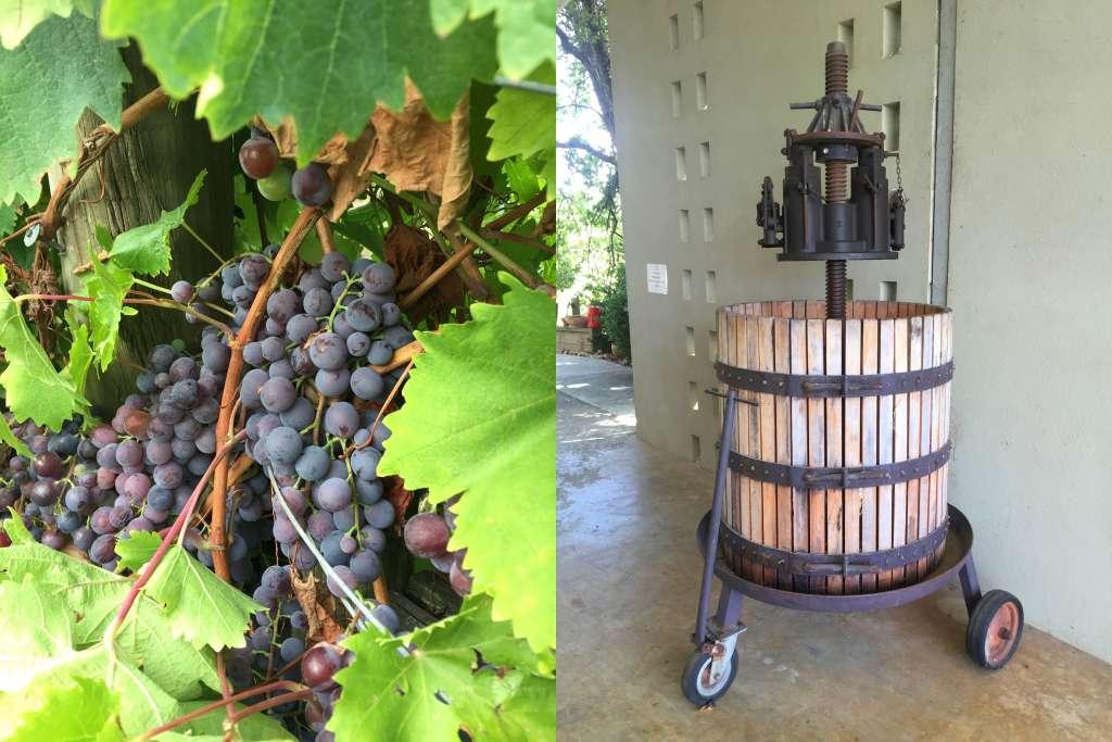 Yarra Yerring Grapes, Vintage Grape Press
